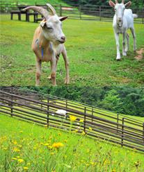 ふれあい牧場 楓の杜