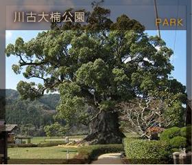 川古大楠公園